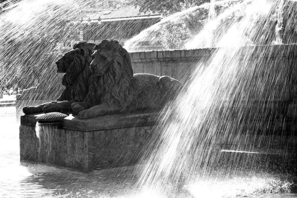 Photographie des Lions de la Rotonde