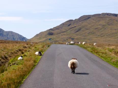 #09 Les bouchons irlandais