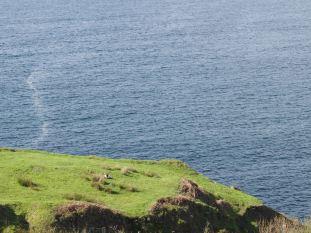 photo-irlande81