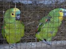 """CETAS devolve aves ao seu """"habitat"""""""