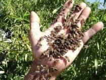 Itapetinga: Idoso morre atacado por abelhas