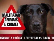 É Constitucional e legal invadir domicílio para salvar animal sob maus-tratos