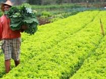 Aprovada MP que refinancia pequenos produtores