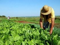 Renegociação de dívidas de agricultores tem novas regras