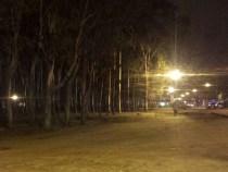 Bosque da Paquera recebe iluminação