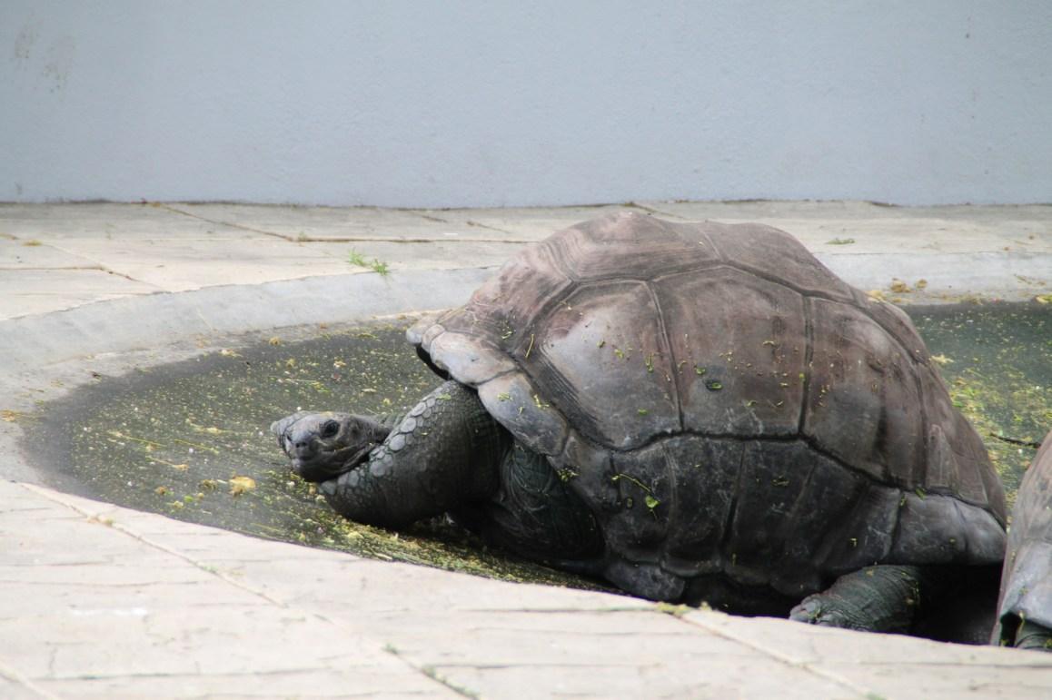 Landschildkröten in der hoteleigenen Tierfarm