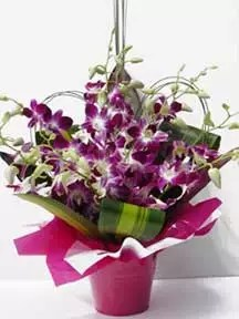 Ask to deliver purple orchid flowers in Dubai