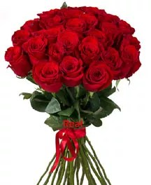 20 red roses long stem Valentine day
