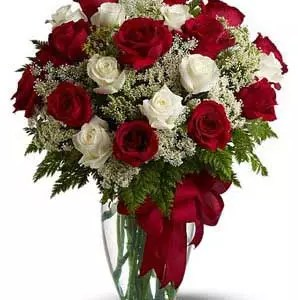amazing 25 blooms of red white roses