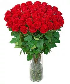 40 red roses Valentine's Day Gift