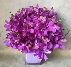 PURPLE MOKARA ORCHIDS