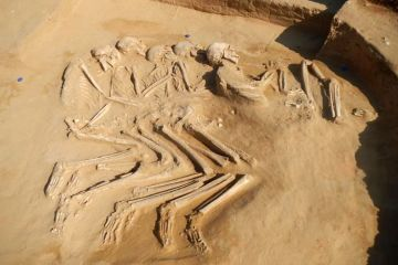 Five interlocked skeletons dating back thousands of years found in the UAE