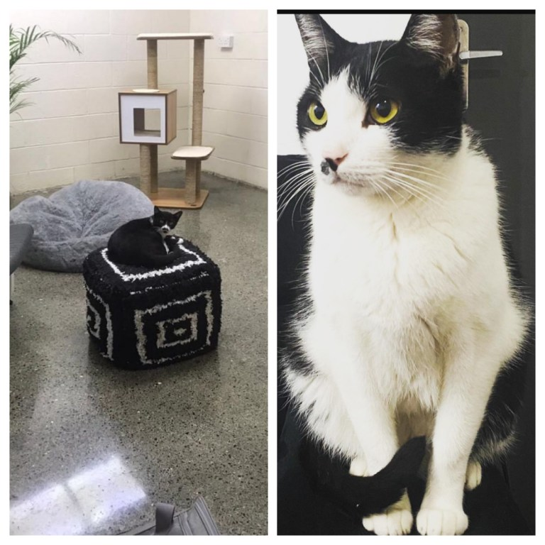 Luxury Cat Hotel opens in Dubai with multi-storey condos for VIP kitties
