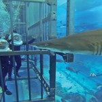Cage-snorkeling-at-the-Dubai-Mall-Aquarium