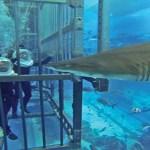 Cage-snorkeling-at-the-Dubai-Mall-Aquarium