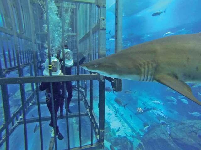 Cage snorkeling at the Dubai Mall Aquarium