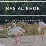 birds in Ras Al Khor Wildlife Sabtuary Image