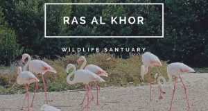 birds in Ras Al Khor Wildlife Sabtuary Image