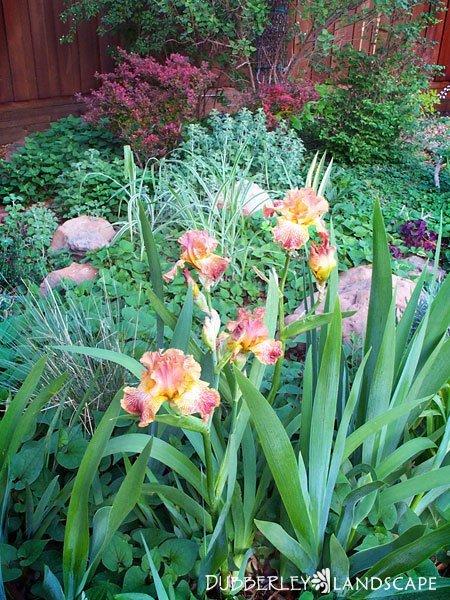 Pond Friendly Plants