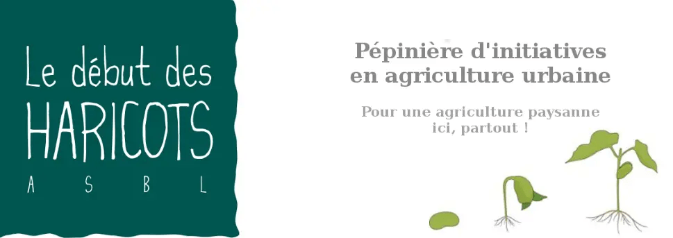 Debut des Haricots Web Header