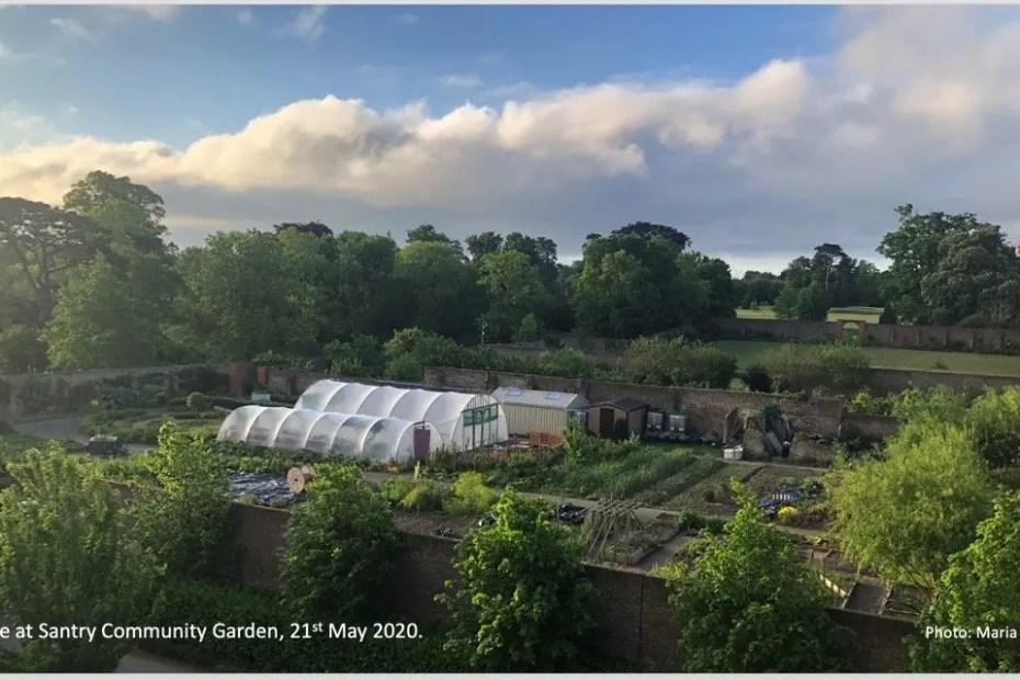 Sunrise at Santry Community Garden