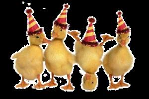 NYE ducks