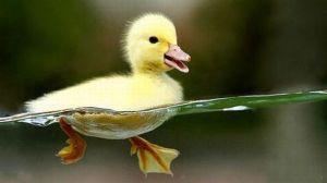 cute-duck