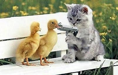 kitten_gun_20091116_1758924905