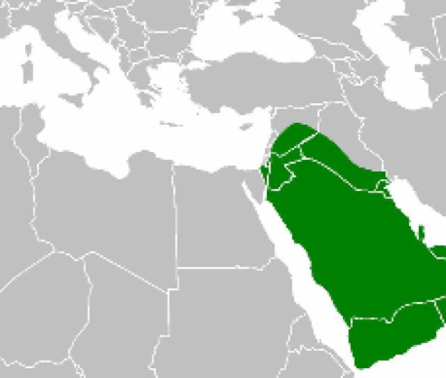 Islamic Empire