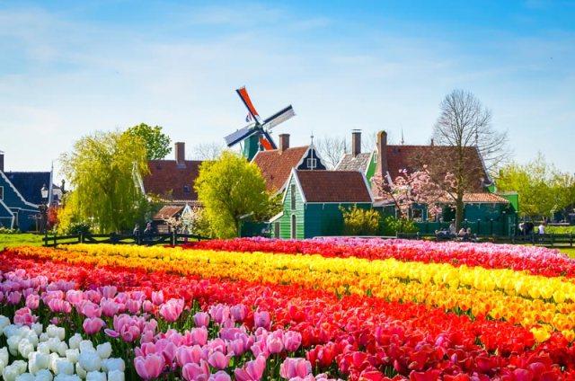 Vila dos minhos na Holanda com campos de flores