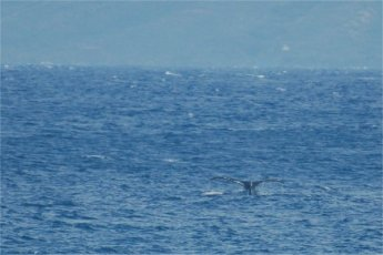 another whale tail