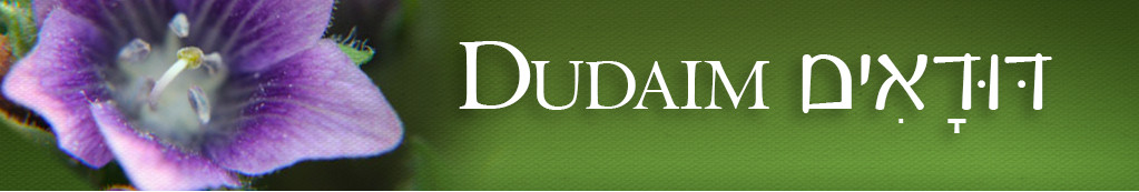 Image result for dudaim