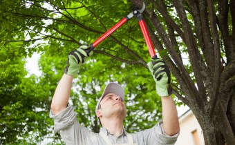 man trimming tree branches