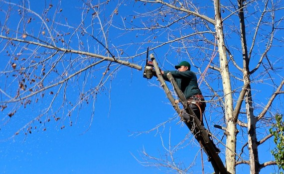 man on a tree limb trimming a branch