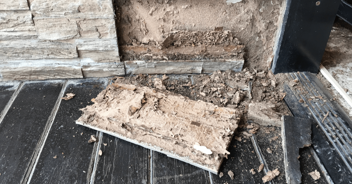 Termite Damage in Your Home 6 Steps to Filing a Claim