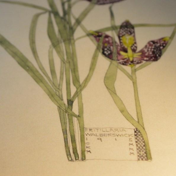 Charles Rennie Mackintosh - Fritillaria detail from Duille