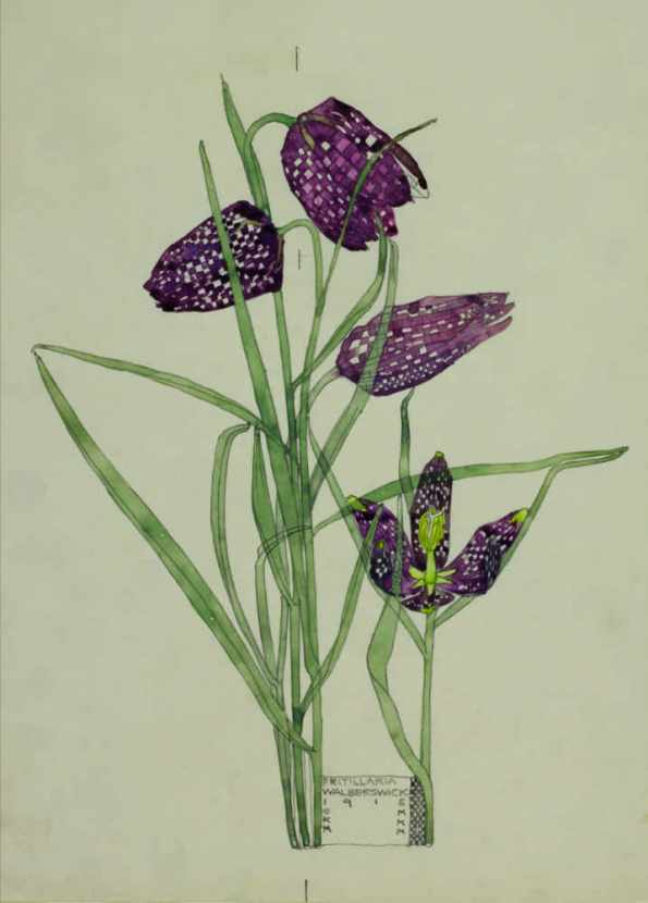 Charles Rennie Mackintosh - Fritillaria Art Card from Duille