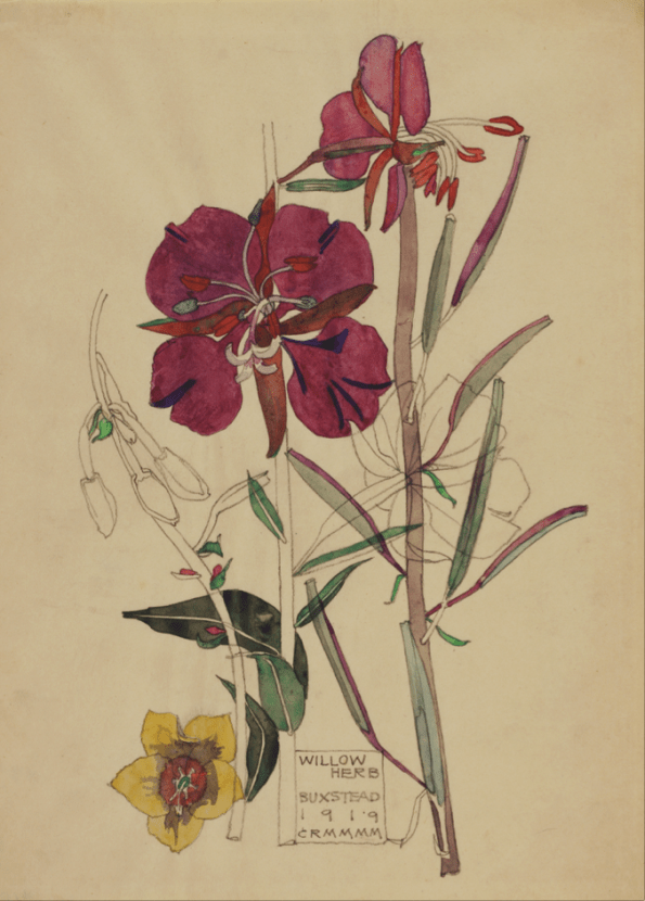 Charles Rennie Mackintosh - Willow Herb Art Card from Duille
