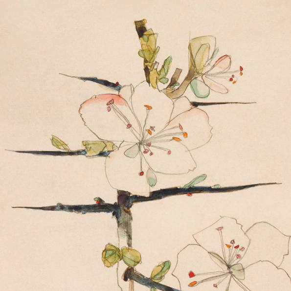 Detail - Blackthorn, Chiddingstone. Charles Rennie Mackintosh.