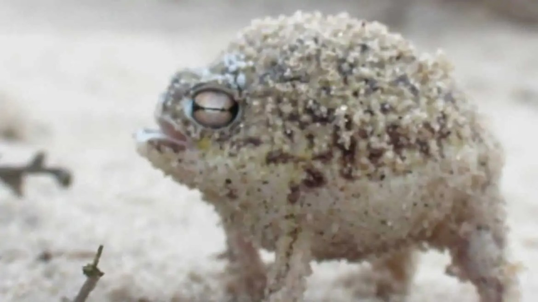 De schattigste kikker ever