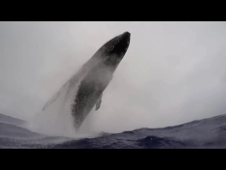 Walvis landt naast zwemmer