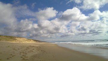 Natuurwaarden van de stranden