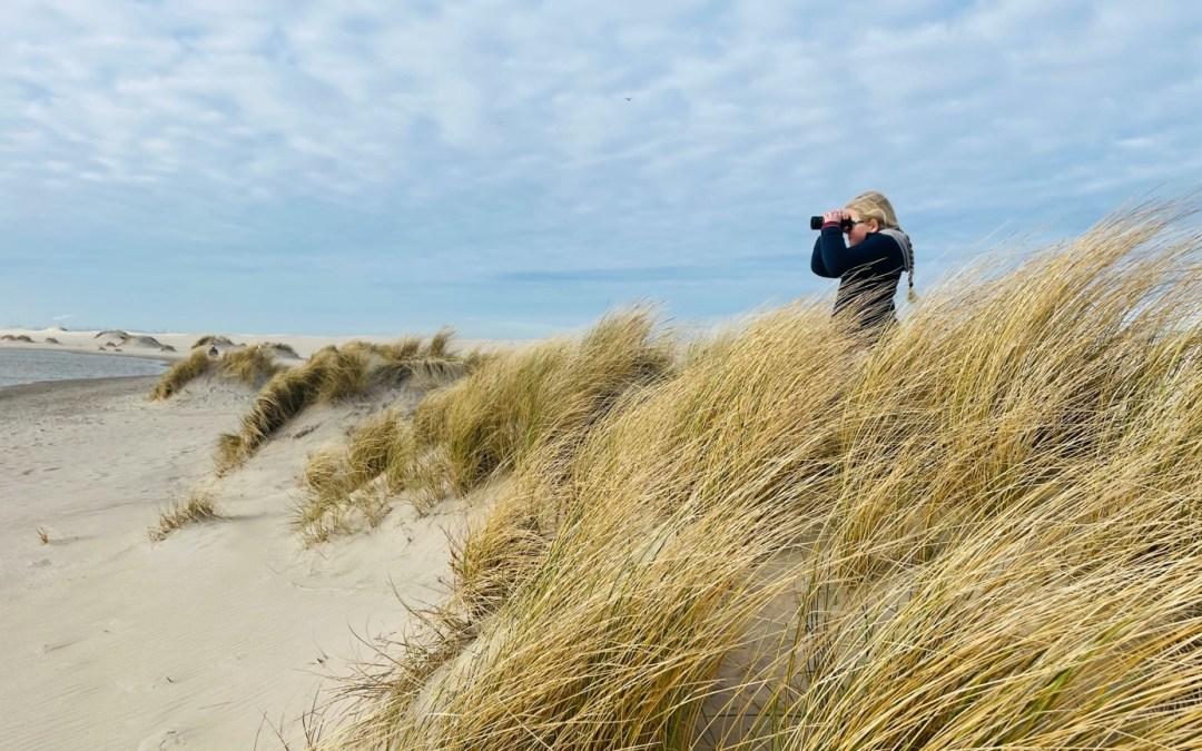Ooggetuige van het ontstaan van een nieuw duin: Een wandeling rond de Zandmotor