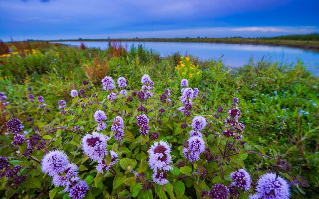 3 tips voor de mooiste natuurfoto's