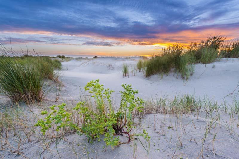Zoet, brak en zout: door de duinen van Kwade Hoek Zuid-Holland: 18 september, 9.30 tot 12.00