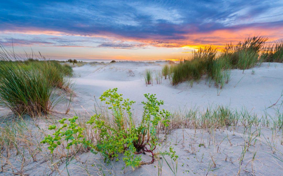 Aandacht voor bedreigde natuur op eerste Dag van de Duinen
