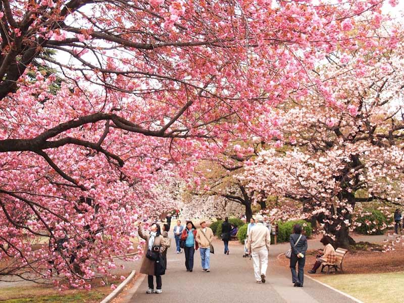 Top 5 địa điểm ngắm hoa nổi tiếng nhất thế giới bạn nên đến một lần
