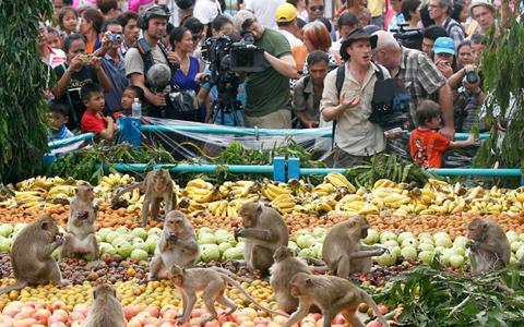 Lễ hội Buffet Khỉ ở Thái Lan