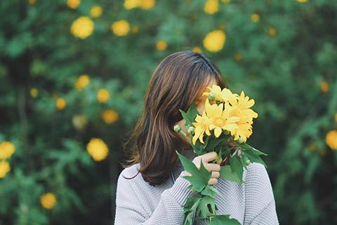 Hoa dã quỳ Đà Lạt