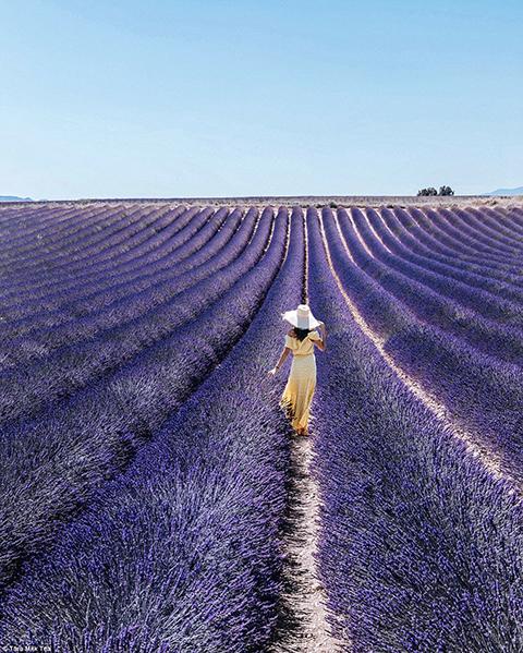 cánh đồng oải hương, Pháp